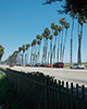 Thumbnail of Cabrillo Boulevard and Palms